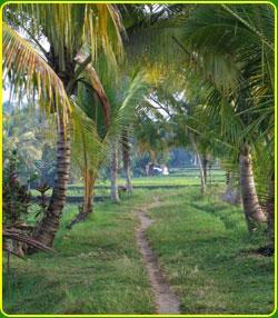 Bali Nature Herbal Walks