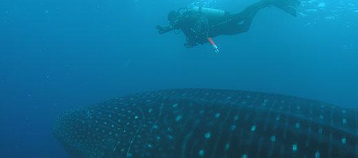 Exploramar Diving Day Tours