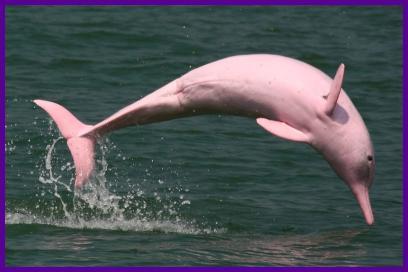 돌고래 & 고래 구경