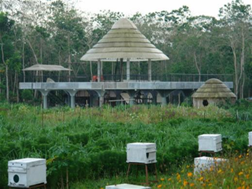 Ilog Maria Honeybee Farm