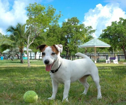 Higgs Beach Dog Park