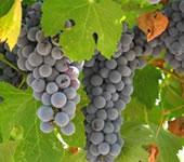 Mastropietro Winery
