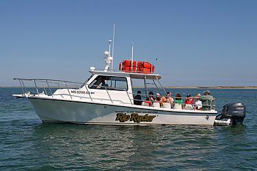 Monomoy Island Ferry