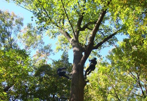 Twin Pines Recreational Tree Climbing LLC