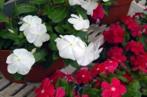 Nishijima Flower Garden