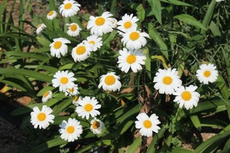 Innoshima Flower Center
