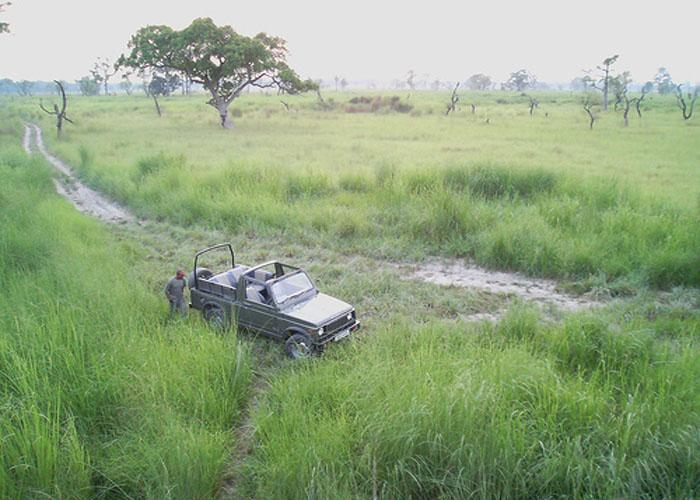 Dudhwa Tigerhino Resort