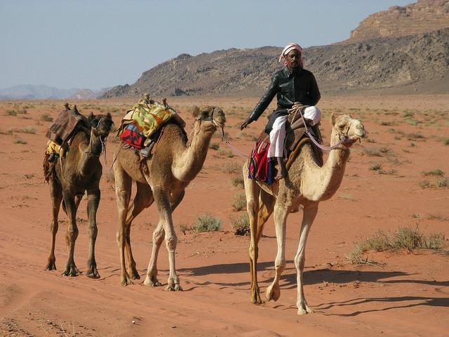 Bedouin Advisor