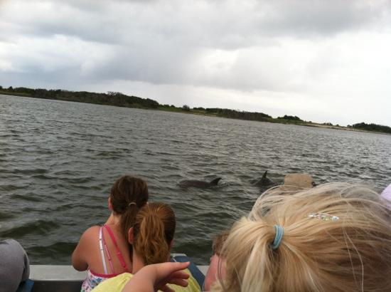 Jet Boat Dolphin Tours