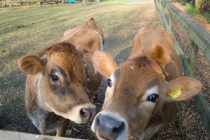 Heeley City Farm