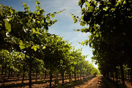 Michael David Vineyards