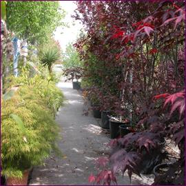 Omearas Garden Centre