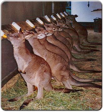 Jirrahlinga Koala & Wildlife Sanctuary