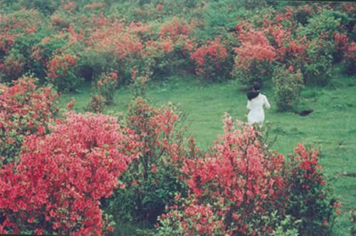 仰天湖草原风景旅游区