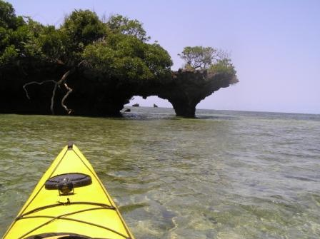 The Infinite Horizon: Sea Kayak and Safari Day Tours