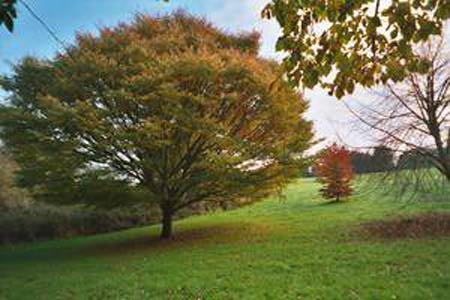 Radford Park and Arboretum