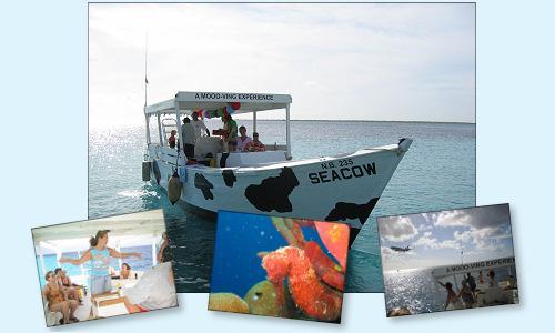 Sea Cow Snorkeling Trips