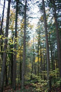 Mount Talbert Nature Park