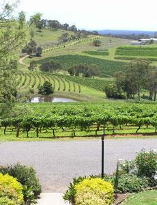 Hunter Valley Vine Link Tours