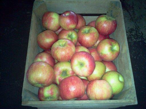 Mackintosh Fruit Farm