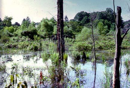 Quakertown Swamp