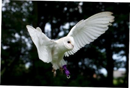 Bridlington Birds of Prey & Animal Park