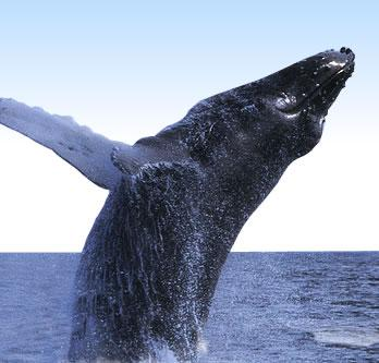 Lunenburg Whale Watching Tours