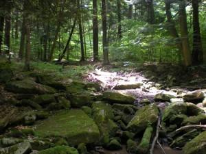 Rollin T Grant Gulf Wilderness Trail