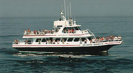 Atlantic Whale Watch