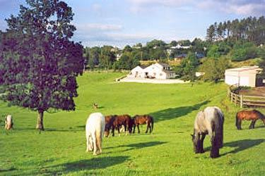 Muckross Stables and Petfarm