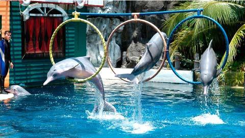Koh Kong SafariWorld