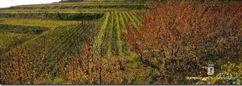 Azienda Vinicola Barone di Villagrande e Cantine