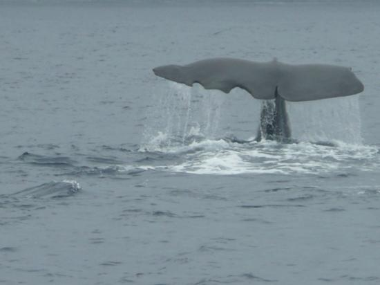 Whale Watch Azores