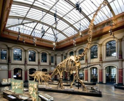 Museum fur Naturkunde (Natural History Museum)