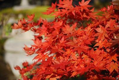 境内の日本の秋