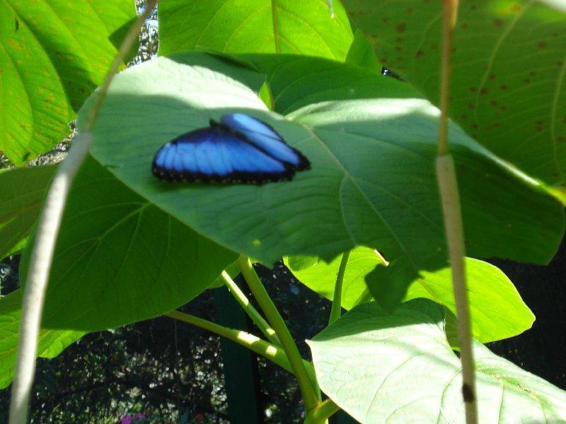 finca de mariposa - butterfly farm