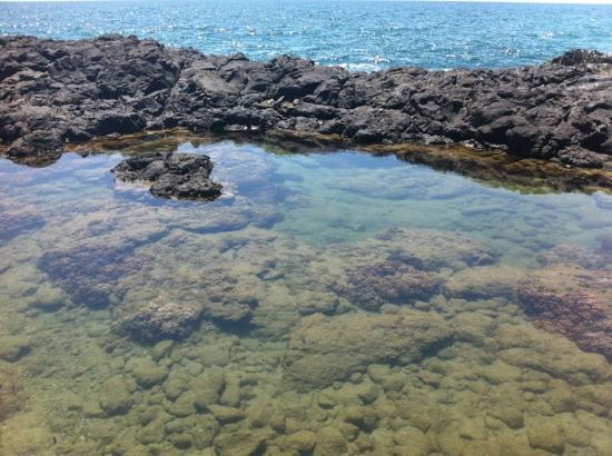 one of many rock pools with colourful fish