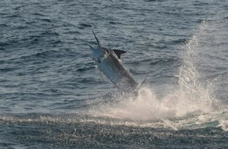 Fishing Charters Cabo