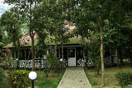 Hotel Jungle Lodge