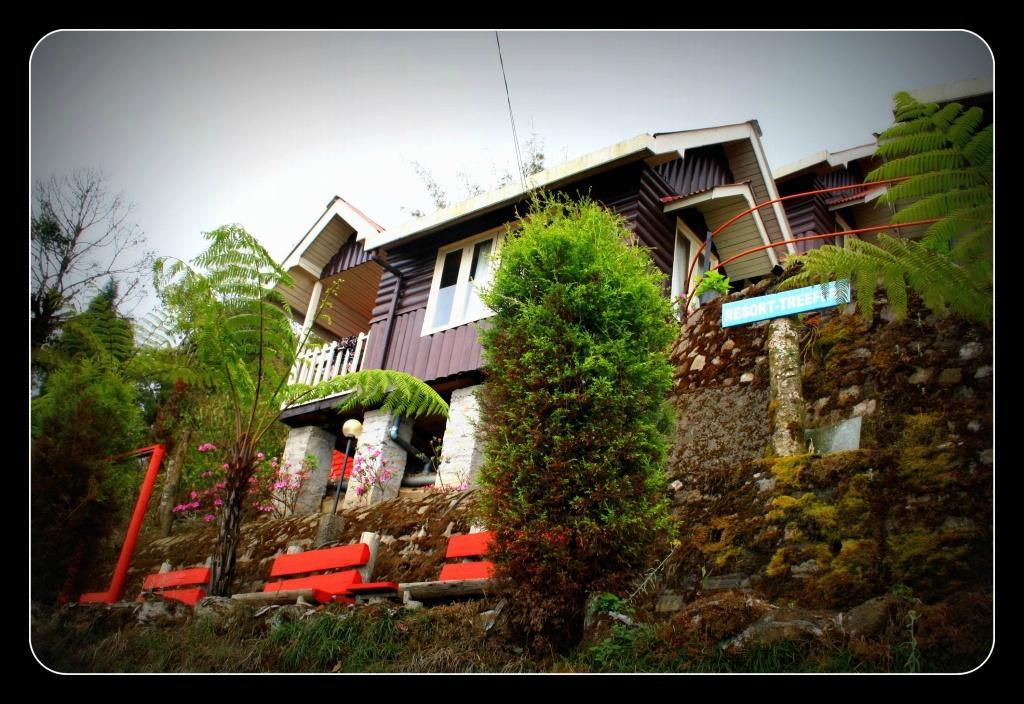 Resort Tree-Fern