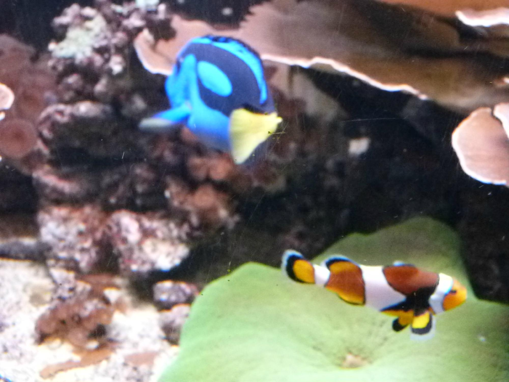 aquarium sea val d europe marne la vallee all you need to before you go
