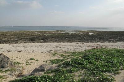 Ou-jima Island