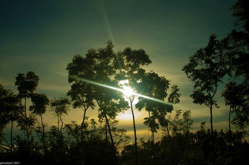 The Tamarind Tree Resort