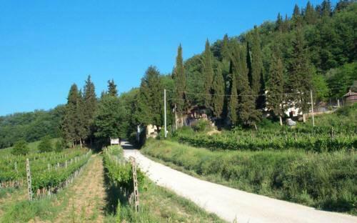 Agriturismo Lucciano