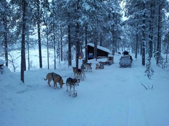 Arctic Husky Adventures