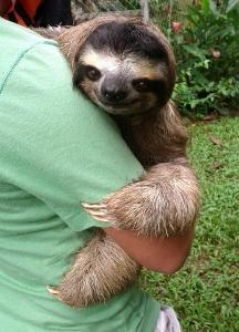 Costa Rica Wildlife Sanctuary