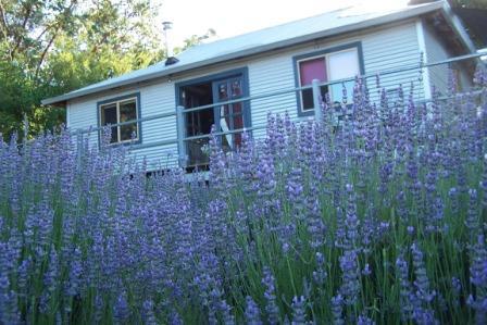 Nannup Lavender Farm