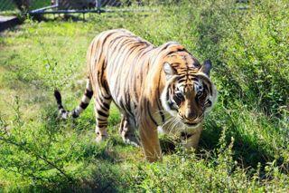 TGR Exotics Wildlife Park