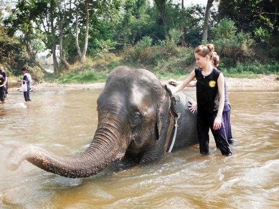 ‪Chiang Mai Elephant Care - Day Tours‬
