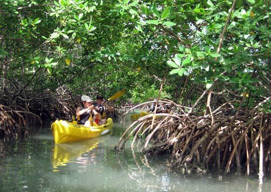 TI-Evasion Kayak de mer en Guadeloupe